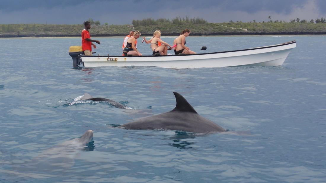 Dolphin Trip - Swahili Holidays & Safaris - Zanzibar